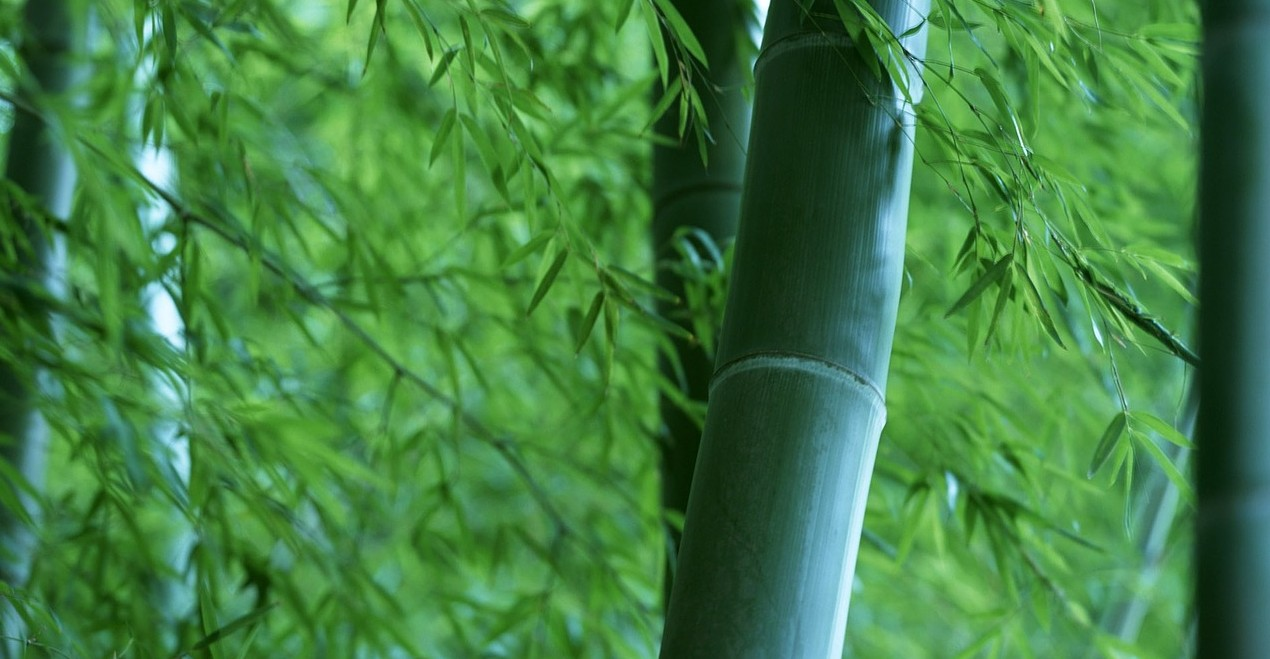bamboo-787538_1280