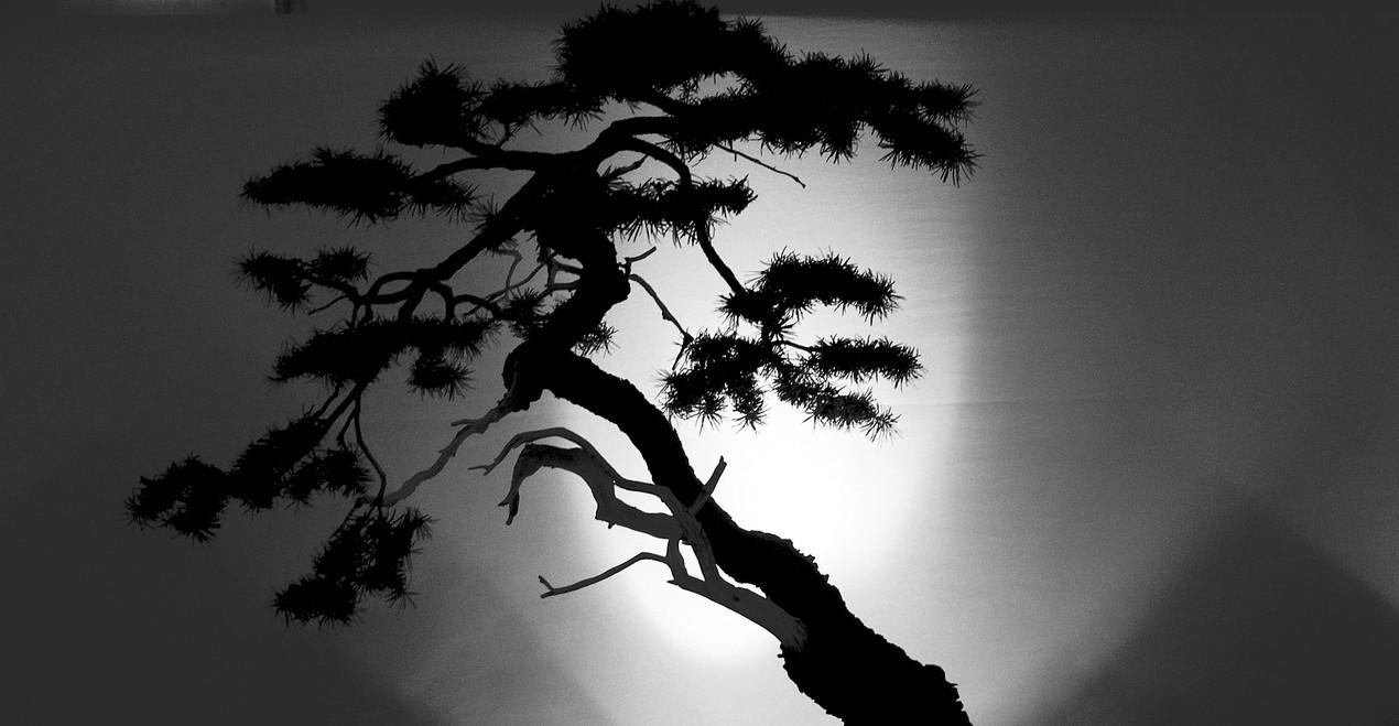 bonsai-455628_1280