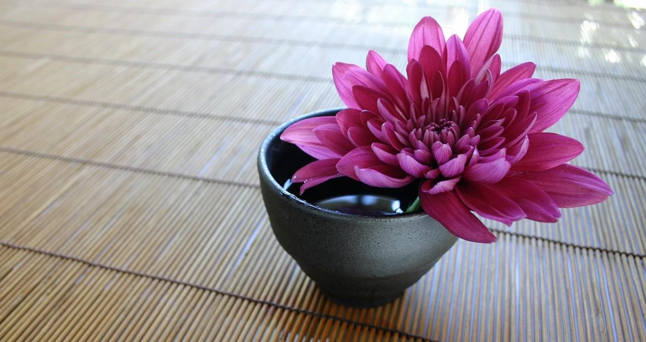 cropped-chrysanthemum-757439_1280.jpg