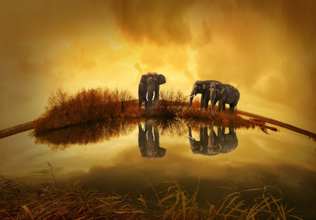 three elephants alone