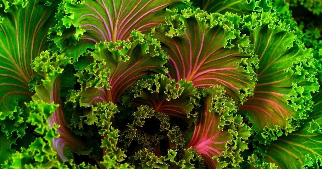cropped-plant-690051_1280.jpg