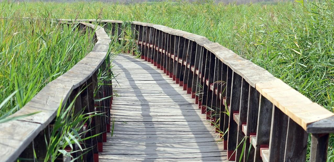 Boardwalk pathway
