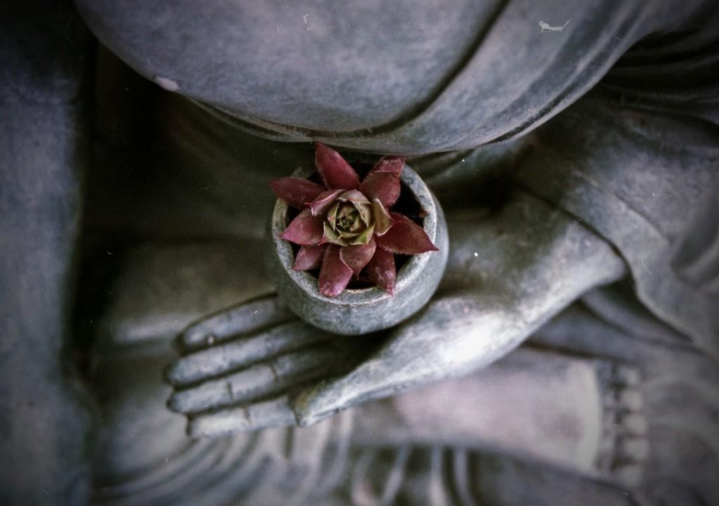 buddha statue holding flower